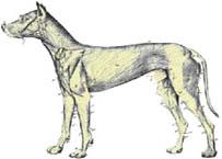 K9 Immunity™ Helps Canine Lymphoma